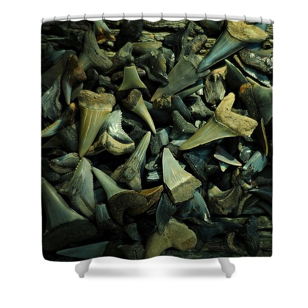 Miocene Fossil Shark Tooth Assortment Shower Curtain