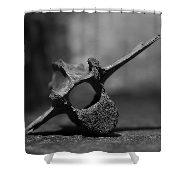 Miocene Fossil Whale Vertebra Shower Curtain
