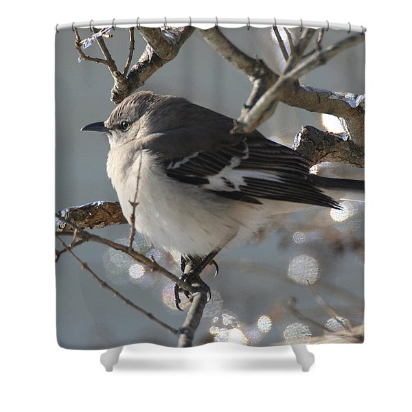 Mockingbird In Winter Shower Curtain