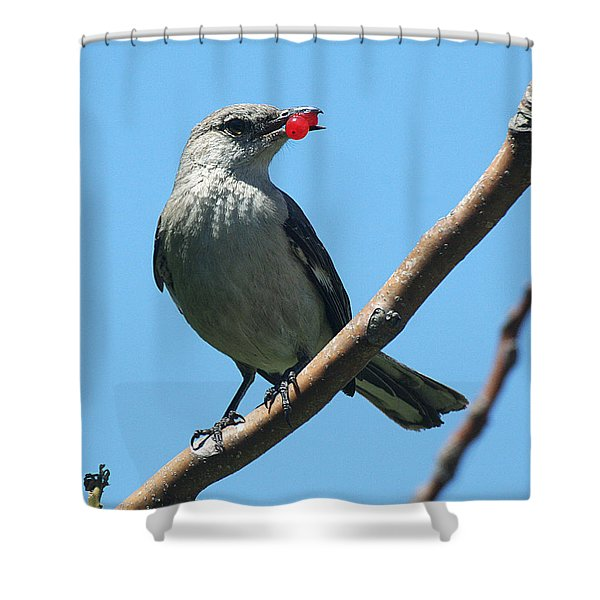 Mockingbird With Berries Shower Curtain