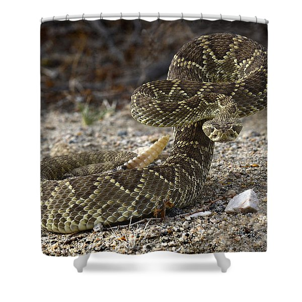 Mohave Green Rattlesnake Striking Position Shower Curtain