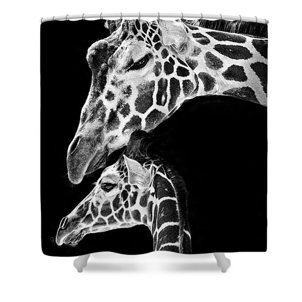 Mom And Baby Giraffe  Shower Curtain