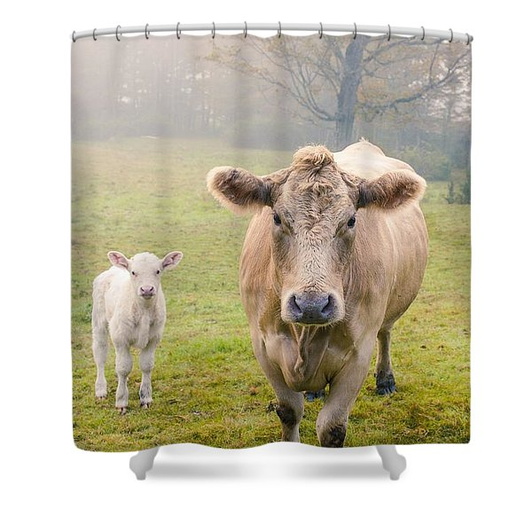 Momma And Baby Cow Shower Curtain