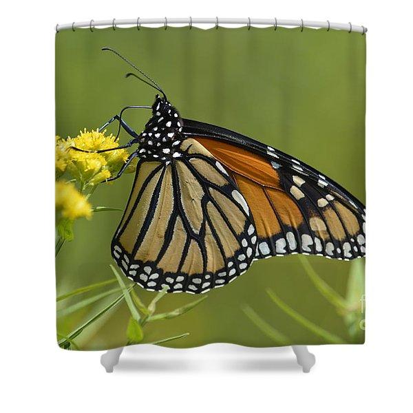 Monarch 2014 Shower Curtain