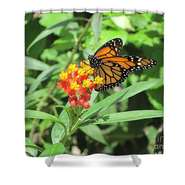 Monarch At Rest Shower Curtain