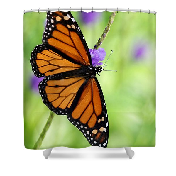Monarch Butterfly In Spring Shower Curtain