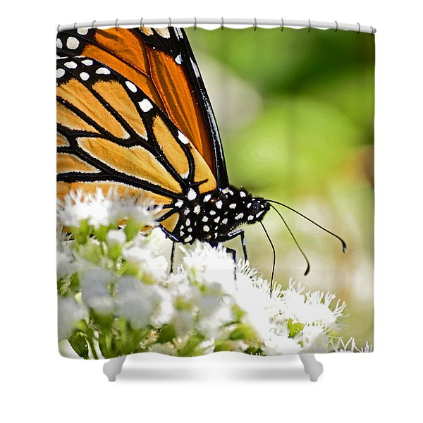 Monarch Moment Shower Curtain