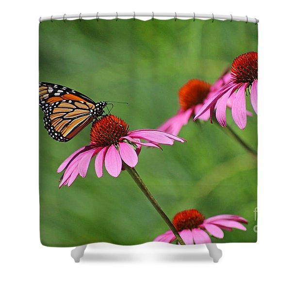 Monarch On Garden Coneflowers Shower Curtain
