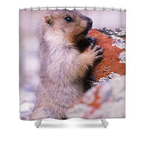 Mongolian Marmot Shower Curtain