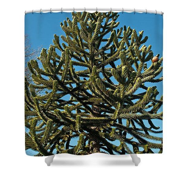 Monkey Puzzle Tree E Shower Curtain