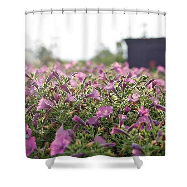 Morning Bugles Shower Curtain