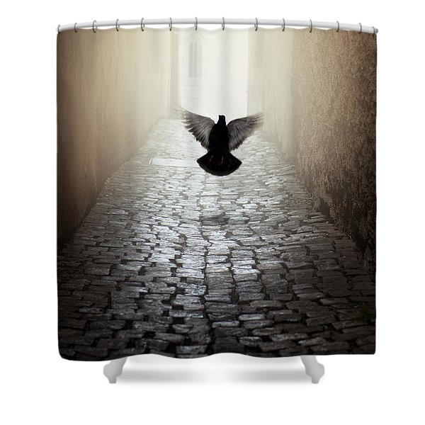 Shower Curtain featuring the photograph Morning Impression With A Dove by Jaroslaw Blaminsky