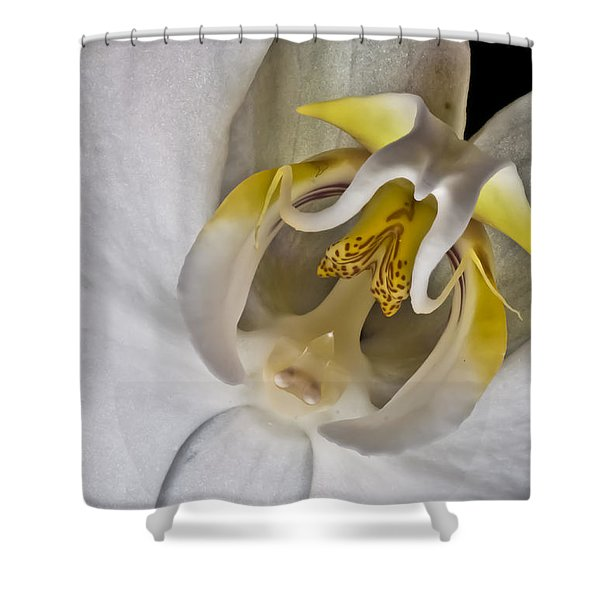 Moth Orchid Inverted Shower Curtain