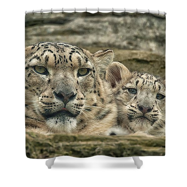 Mother And Cub Shower Curtain