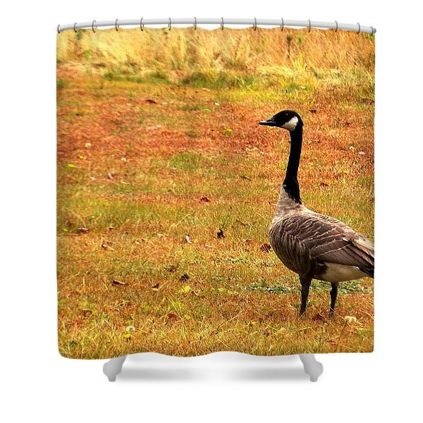 Mother Goose Fall Foliage Tours Shower Curtain