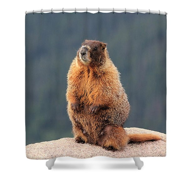 Mother Marmot Shower Curtain