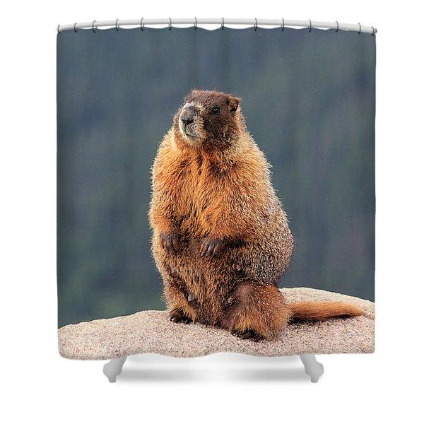 Mother Marmot Shower Curtain