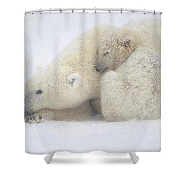 Mother Polar Bear & Cub Huddle In Snow Shower Curtain