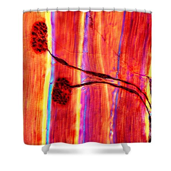 Motor Neurons Shower Curtain