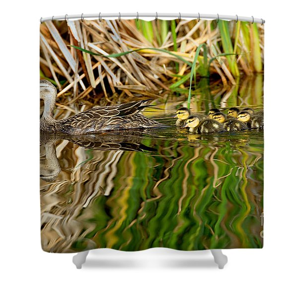 Mottled Duck And Young Shower Curtain