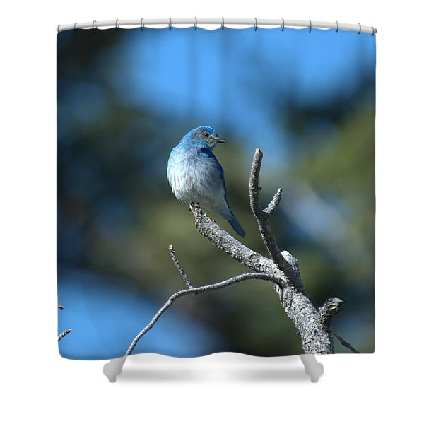 Mountain Bluebird Shower Curtain