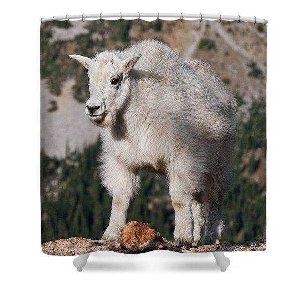 Mountain Goat Kid Standing On A Boulder Shower Curtain
