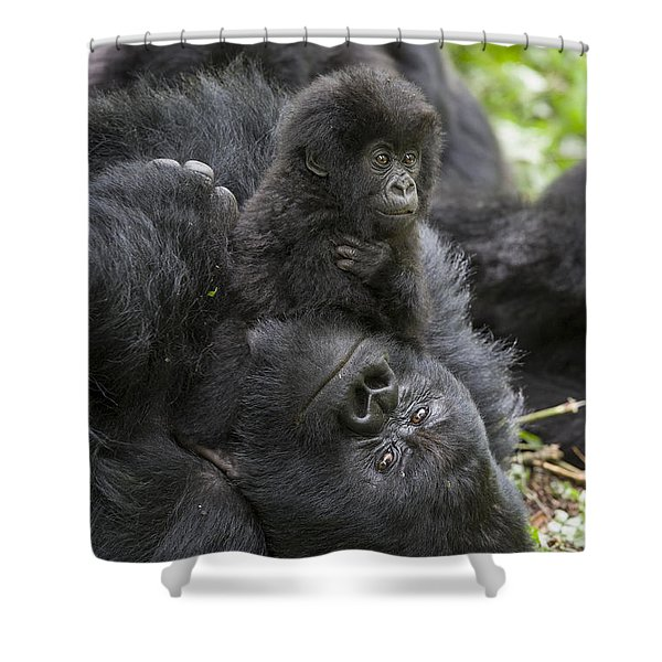 Mountain Gorilla Baby Playing Shower Curtain