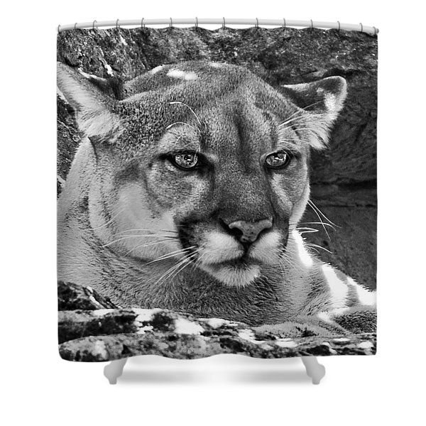 Mountain Lion Bergen County Zoo Shower Curtain