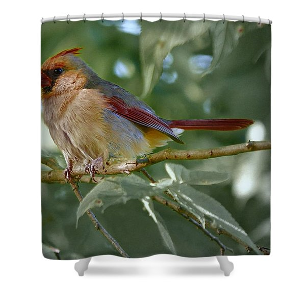 Mrs. Cardinal Shower Curtain