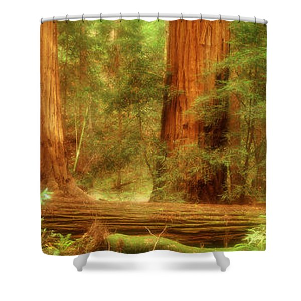 Muir Woods, Trees, National Park Shower Curtain