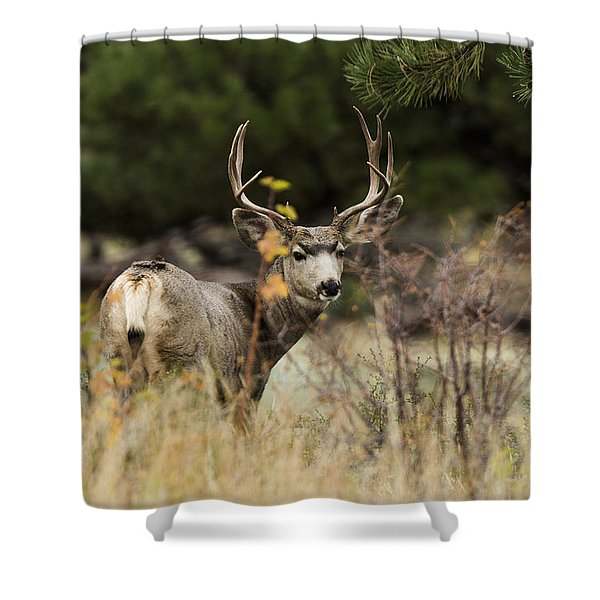Mule Deer I Shower Curtain