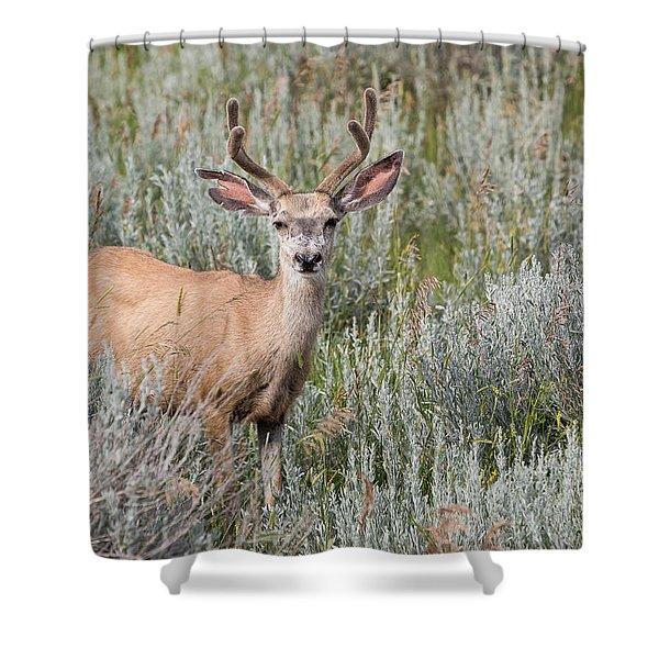 Mule Deer Shower Curtain