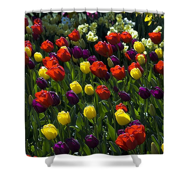 Colorful Tulip Field Shower Curtain