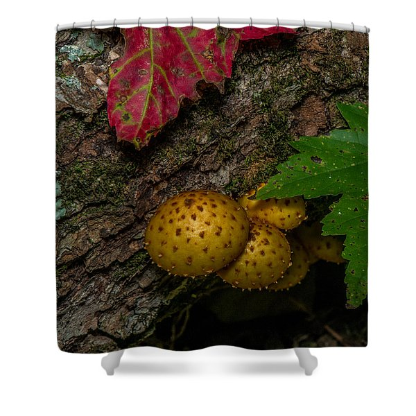 Mushrooms On The Forest Floor Shower Curtain