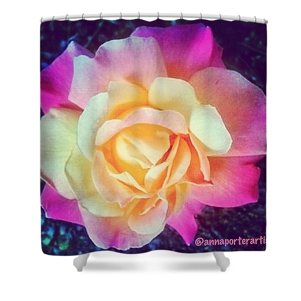 My Favorite Rose - The Lady Diana Shower Curtain