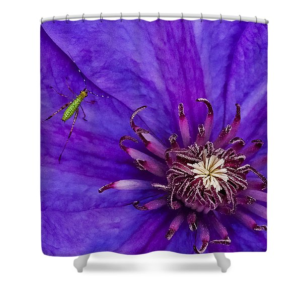 My Old Clematis Home Shower Curtain