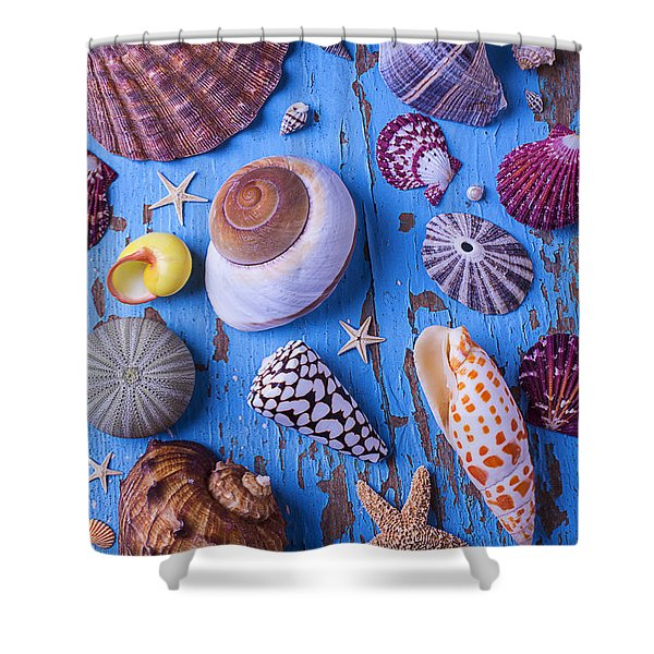 My Shell Collection Shower Curtain