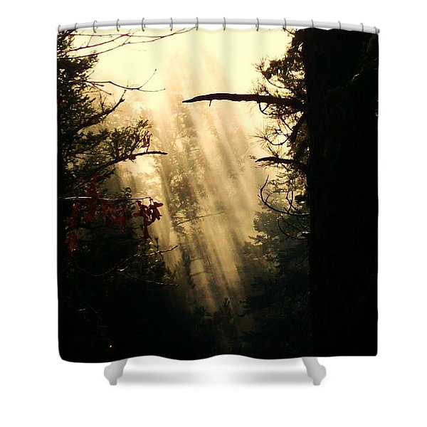 Mystic Woods Shower Curtain
