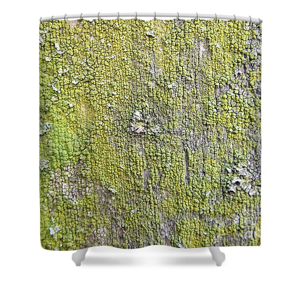 Natural Abstract 1 Old Fence With Moss Shower Curtain