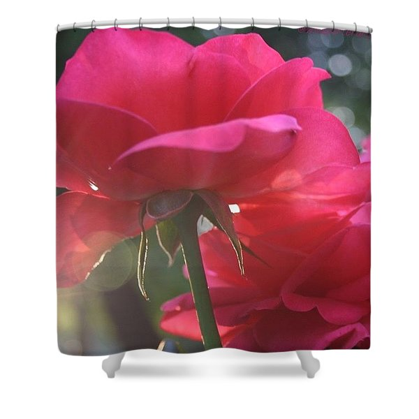 Natural Beauty Ladybird Red Rose Shower Curtain
