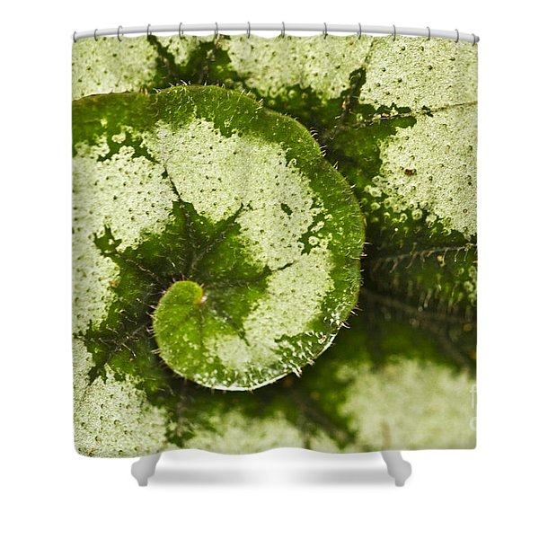 Natures Spiral Shower Curtain