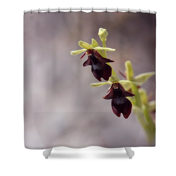 Natures Trick - Mimicry Shower Curtain