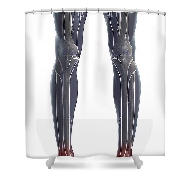 Nerves Of The Legs Shower Curtain