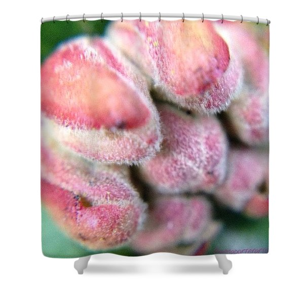New Beginnings-rhododendron Floret Bud Shower Curtain