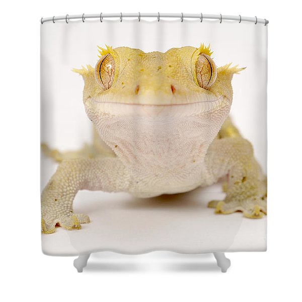 New Caledonian Gecko Shower Curtain