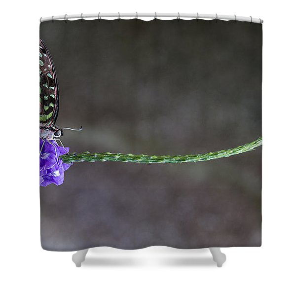 Butterfly - Tailed Jay II Shower Curtain