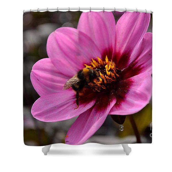 Shower Curtain featuring the photograph Nosy Bumble Bee by Scott Lyons