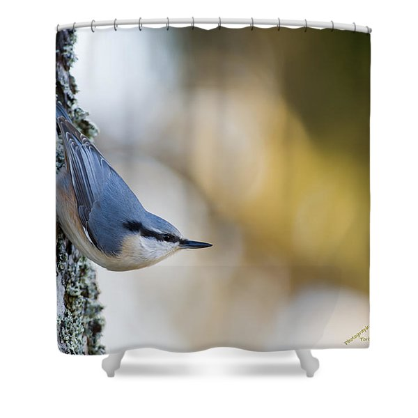 Nuthatch In The Classical Position Shower Curtain