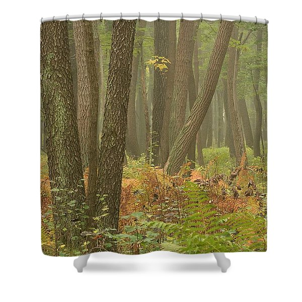 Oak Openings Fog Forest Shower Curtain