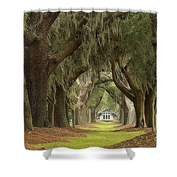 Oaks Of The Golden Isles Shower Curtain